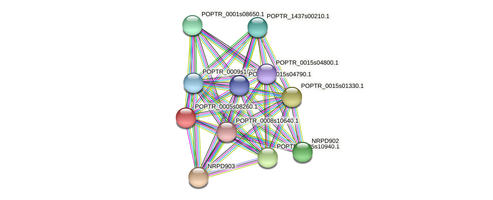 POPTR_0005s08260.1 protein (Populus trichocarpa) - STRING interaction network