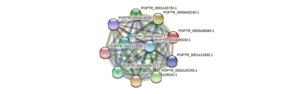 POPTR_0005s08380.1 protein (Populus trichocarpa) - STRING interaction network
