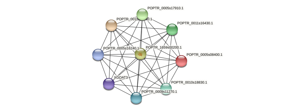 POPTR_0005s08400.1 protein (Populus trichocarpa) - STRING interaction network