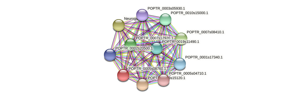 POPTR_0005s08760.1 protein (Populus trichocarpa) - STRING interaction network