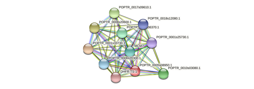 POPTR_0005s08950.1 protein (Populus trichocarpa) - STRING interaction network