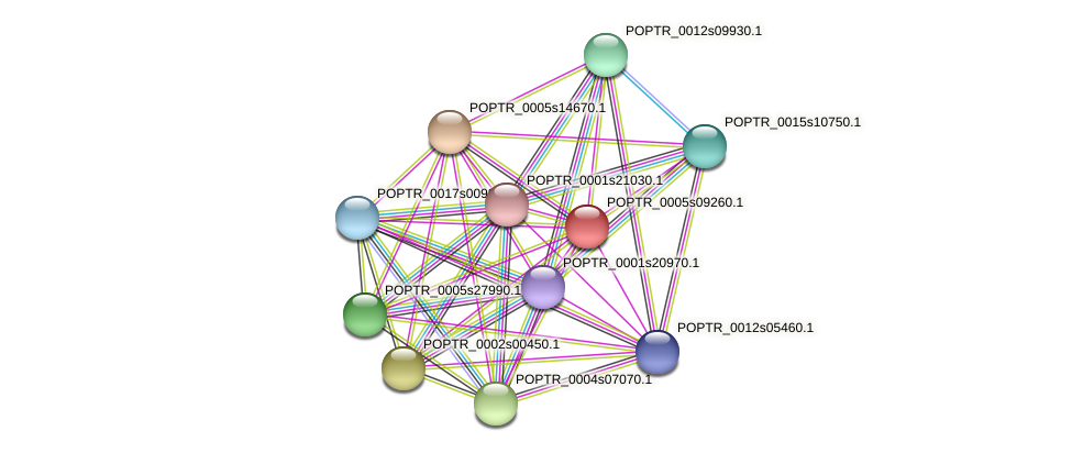 POPTR_0005s09260.1 protein (Populus trichocarpa) - STRING interaction network