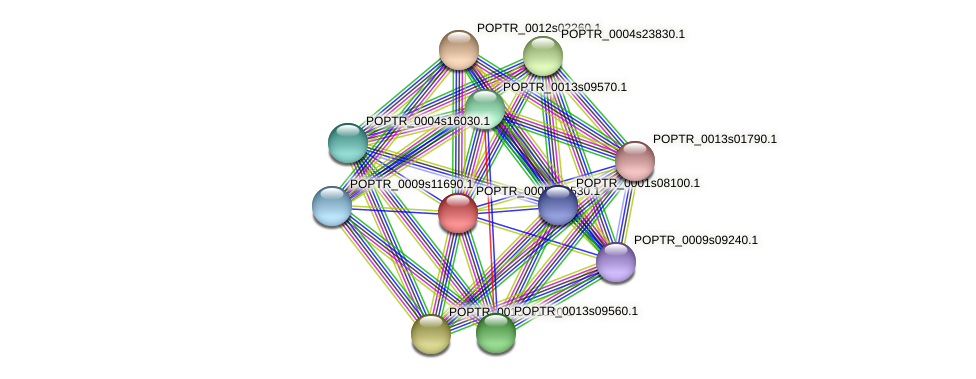 POPTR_0005s09530.1 protein (Populus trichocarpa) - STRING interaction network