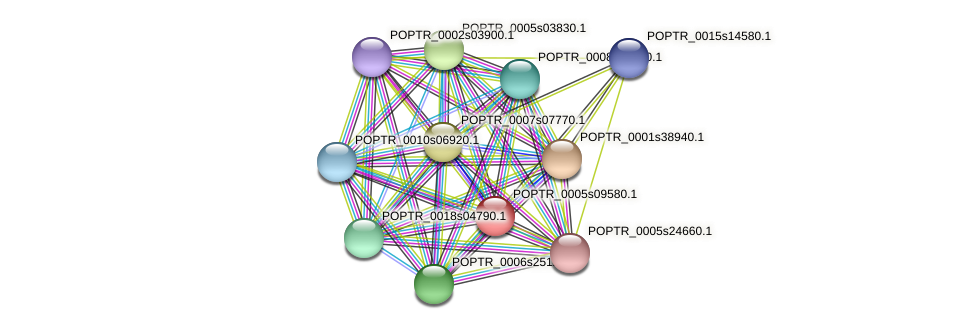 POPTR_0005s09580.1 protein (Populus trichocarpa) - STRING interaction network