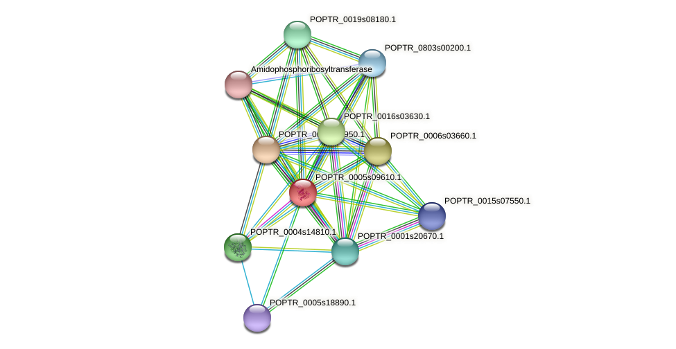 POPTR_0005s09610.1 protein (Populus trichocarpa) - STRING interaction network