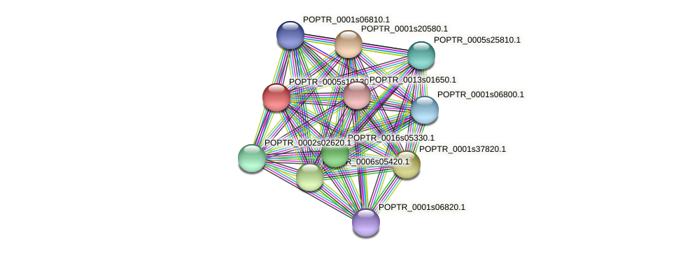 POPTR_0005s10130.1 protein (Populus trichocarpa) - STRING interaction network