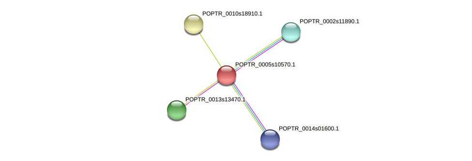 POPTR_0005s10570.1 protein (Populus trichocarpa) - STRING interaction network