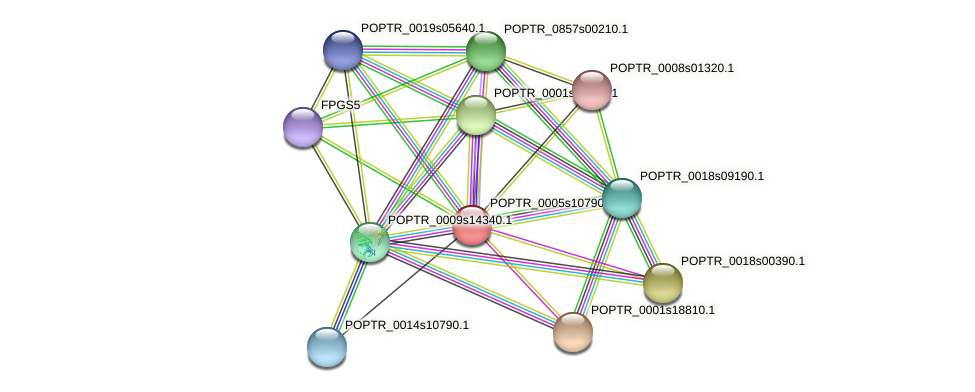 POPTR_0005s10790.1 protein (Populus trichocarpa) - STRING interaction network