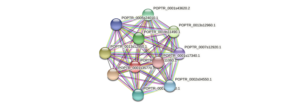 POPTR_0005s11060.1 protein (Populus trichocarpa) - STRING interaction network