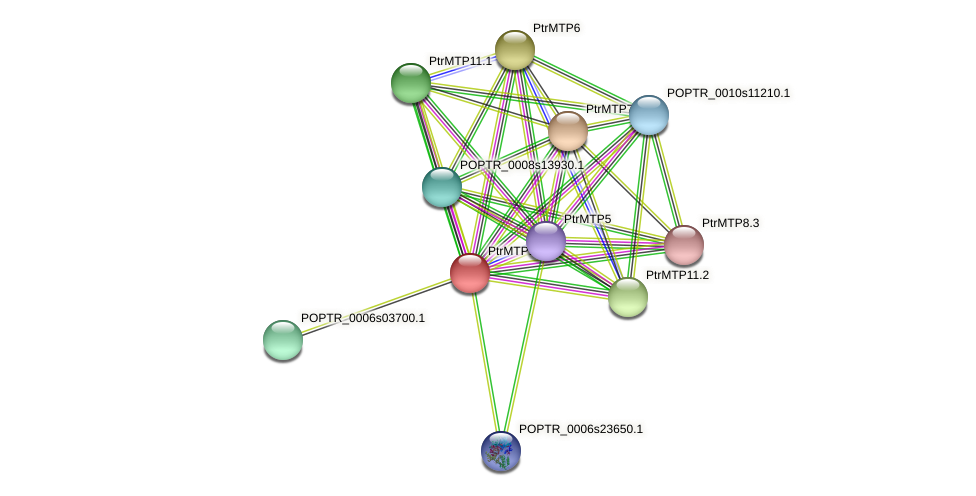 POPTR_0005s11240.1 protein (Populus trichocarpa) - STRING interaction network