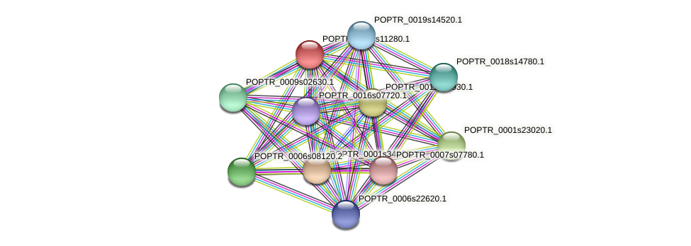 POPTR_0005s11280.1 protein (Populus trichocarpa) - STRING interaction network