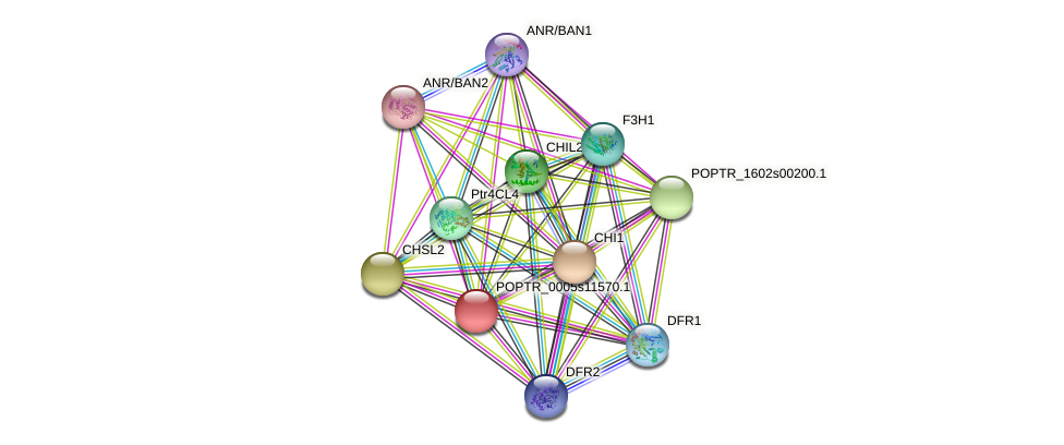 POPTR_0005s11570.1 protein (Populus trichocarpa) - STRING interaction network