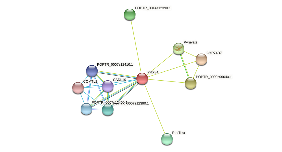 PRX34 protein (Populus trichocarpa) - STRING interaction network