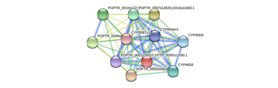 POPTR_0005s12550.1 protein (Populus trichocarpa) - STRING interaction network
