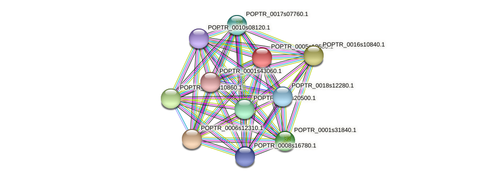 POPTR_0005s12680.1 protein (Populus trichocarpa) - STRING interaction network