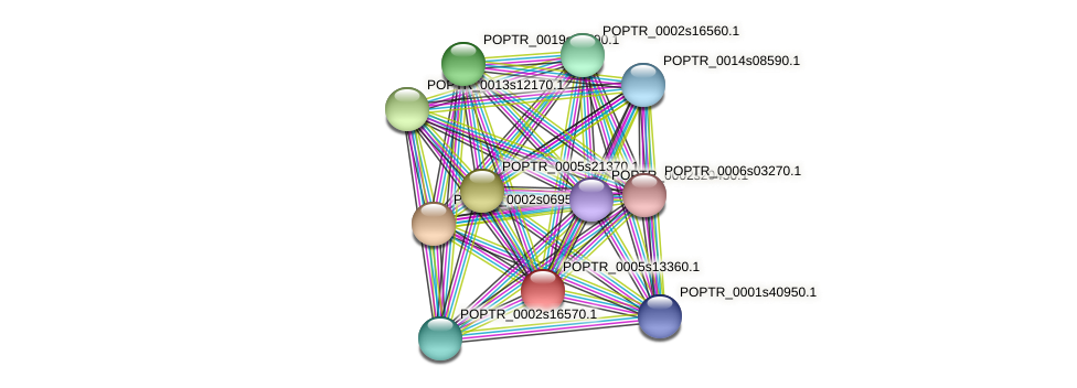 POPTR_0005s13360.1 protein (Populus trichocarpa) - STRING interaction network