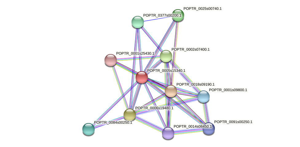 POPTR_0005s15340.1 protein (Populus trichocarpa) - STRING interaction network