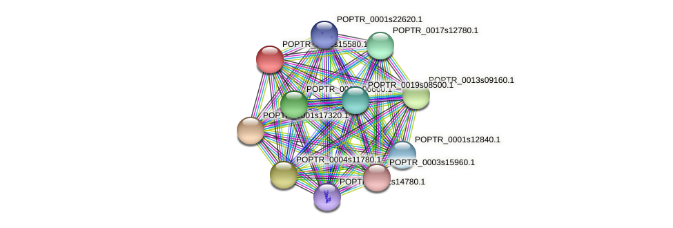 POPTR_0005s15580.1 protein (Populus trichocarpa) - STRING interaction network