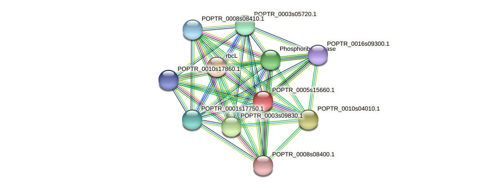 POPTR_0005s15660.1 protein (Populus trichocarpa) - STRING interaction network