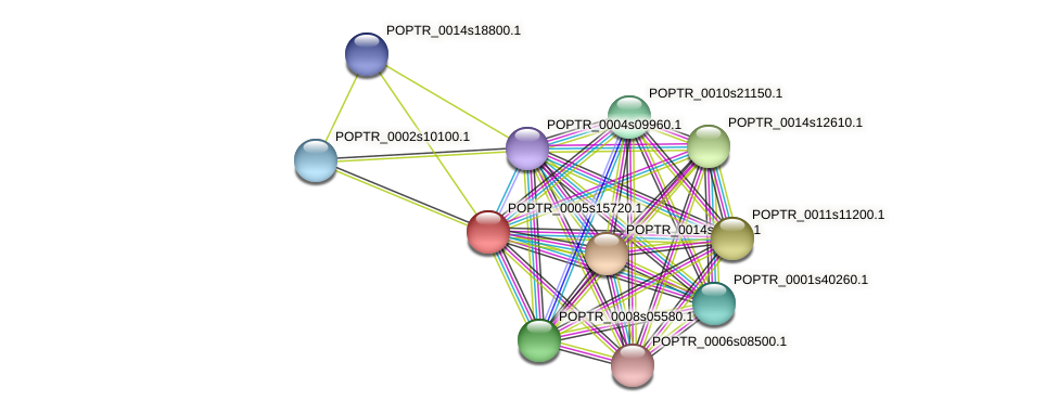 POPTR_0005s15720.1 protein (Populus trichocarpa) - STRING interaction network