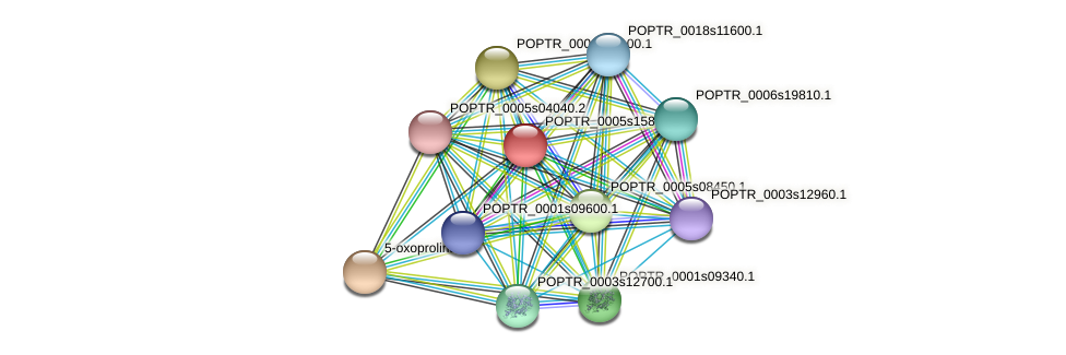 POPTR_0005s15800.1 protein (Populus trichocarpa) - STRING interaction network