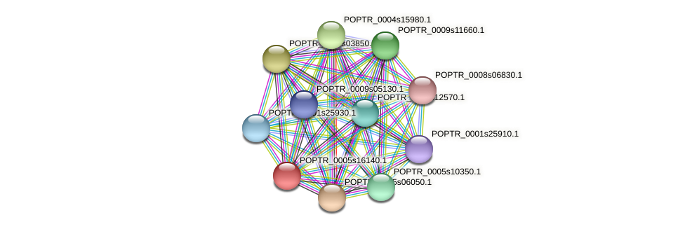 POPTR_0005s16140.1 protein (Populus trichocarpa) - STRING interaction network