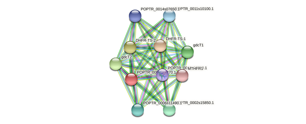 POPTR_0005s16370.1 protein (Populus trichocarpa) - STRING interaction network