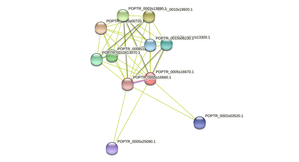 POPTR_0005s16670.1 protein (Populus trichocarpa) - STRING interaction network