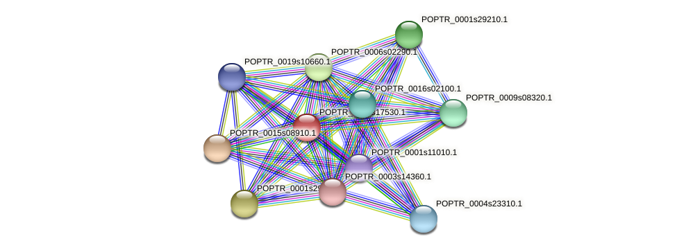 POPTR_0005s17530.1 protein (Populus trichocarpa) - STRING interaction network