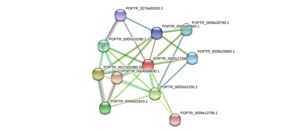 POPTR_0005s17560.1 protein (Populus trichocarpa) - STRING interaction network
