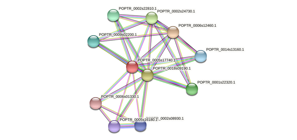 POPTR_0005s17740.1 protein (Populus trichocarpa) - STRING interaction network