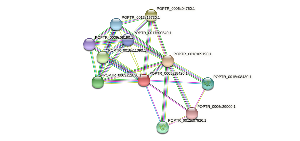 POPTR_0005s18420.1 protein (Populus trichocarpa) - STRING interaction network