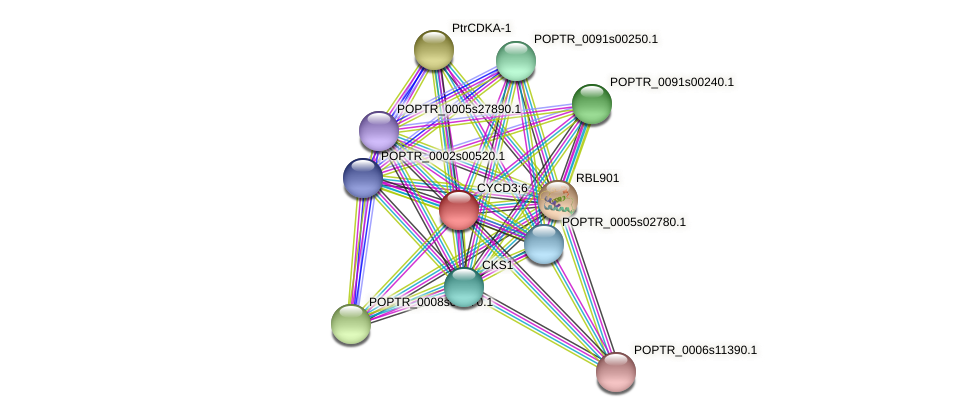 POPTR_0005s18550.1 protein (Populus trichocarpa) - STRING interaction network