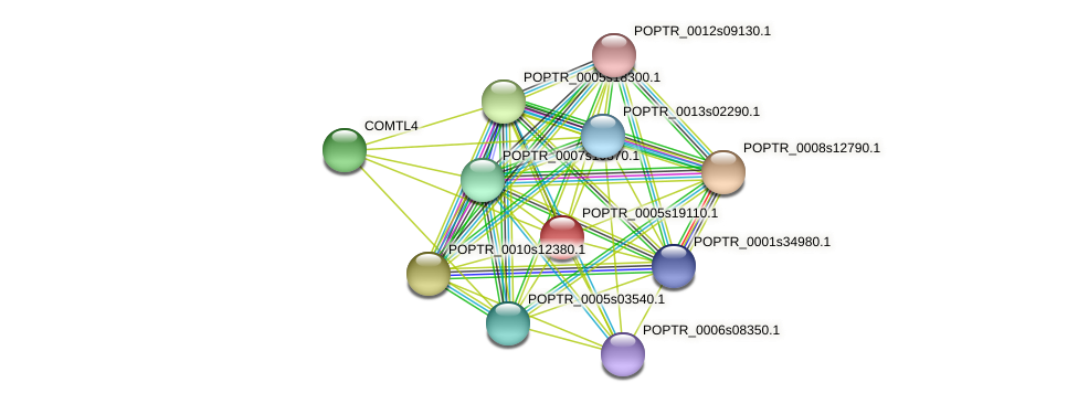 POPTR_0005s19110.1 protein (Populus trichocarpa) - STRING interaction network