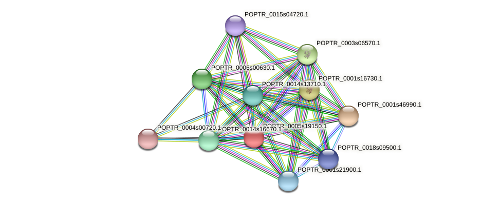 POPTR_0005s19150.1 protein (Populus trichocarpa) - STRING interaction network