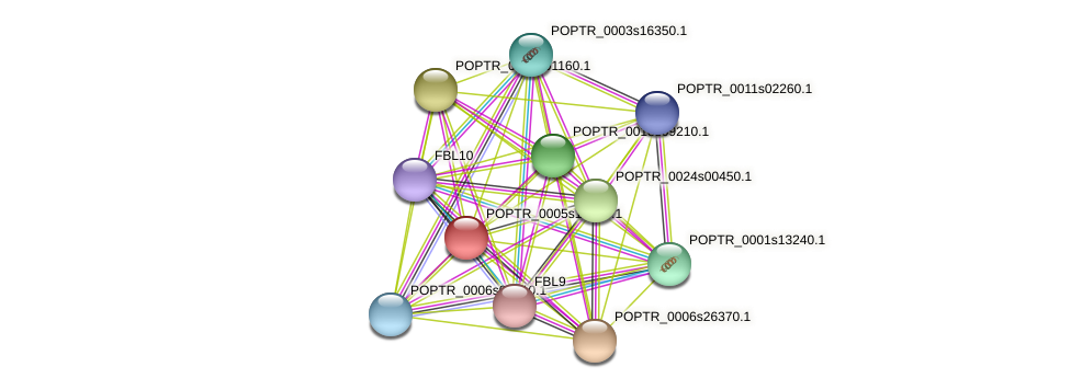 POPTR_0005s19580.1 protein (Populus trichocarpa) - STRING interaction network
