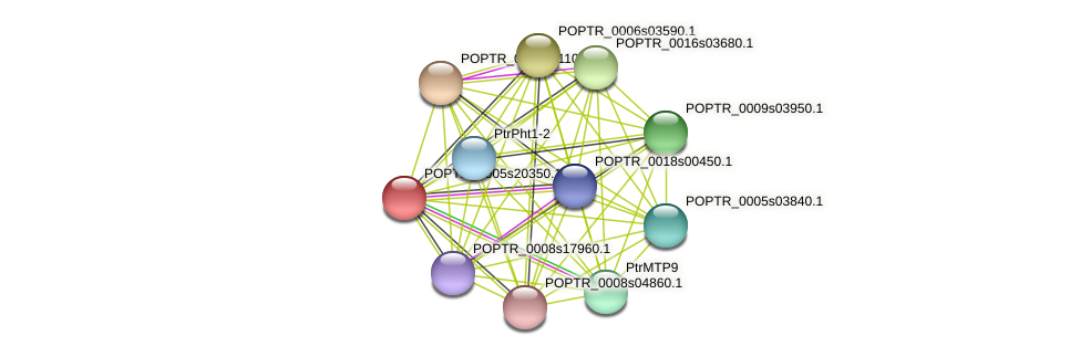 POPTR_0005s20350.1 protein (Populus trichocarpa) - STRING interaction network