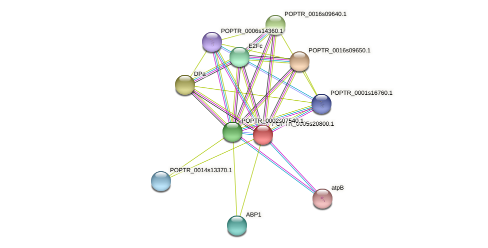 POPTR_0005s20800.1 protein (Populus trichocarpa) - STRING interaction network