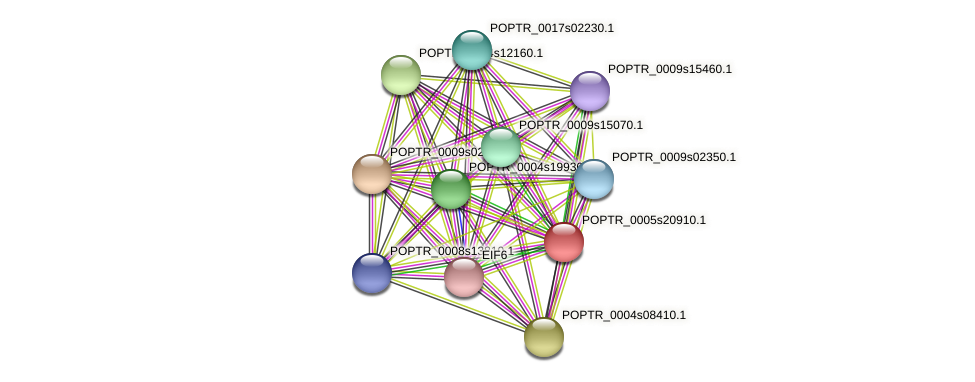 POPTR_0005s20910.1 protein (Populus trichocarpa) - STRING interaction network