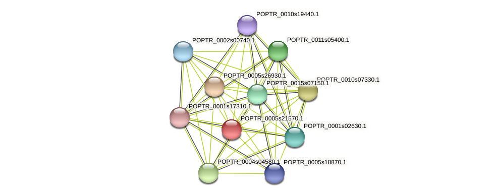 POPTR_0005s21570.1 protein (Populus trichocarpa) - STRING interaction network