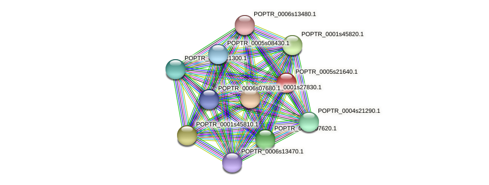 POPTR_0005s21640.1 protein (Populus trichocarpa) - STRING interaction network