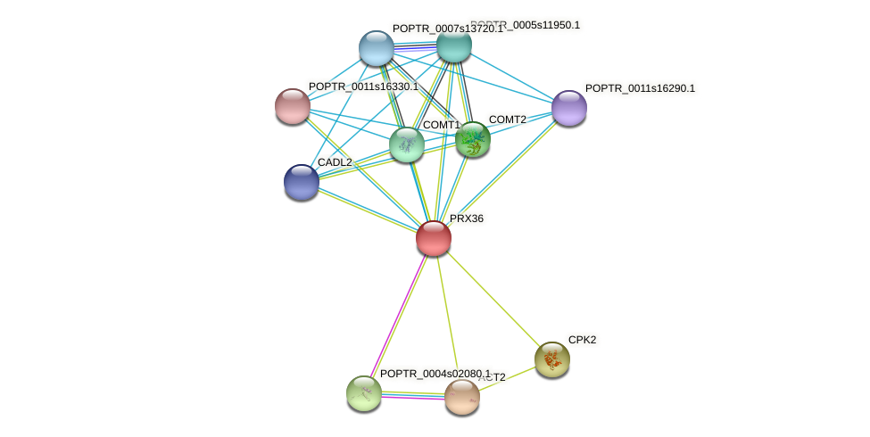 PRX36 protein (Populus trichocarpa) - STRING interaction network