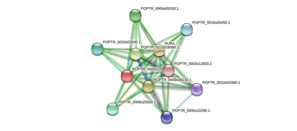 POPTR_0005s22030.1 protein (Populus trichocarpa) - STRING interaction network