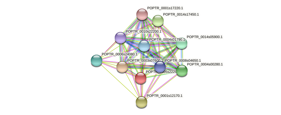 POPTR_0005s22290.1 protein (Populus trichocarpa) - STRING interaction network