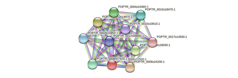 POPTR_0005s22560.1 protein (Populus trichocarpa) - STRING interaction network