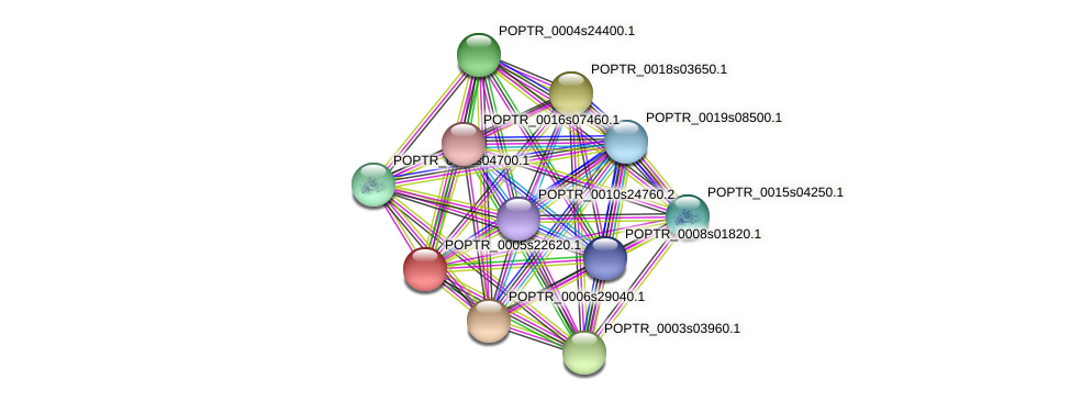 POPTR_0005s22620.1 protein (Populus trichocarpa) - STRING interaction network