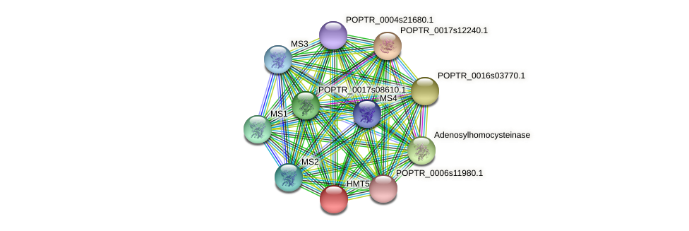 POPTR_0005s23480.1 protein (Populus trichocarpa) - STRING interaction network