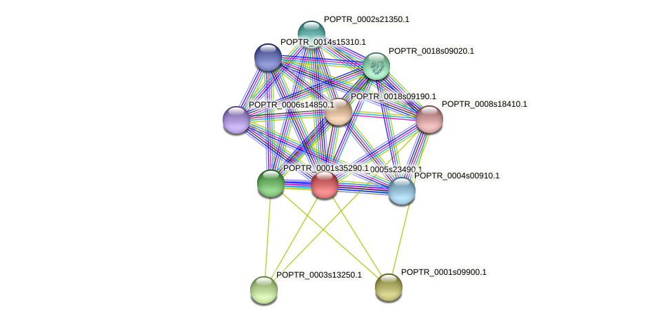 POPTR_0005s23490.1 protein (Populus trichocarpa) - STRING interaction network