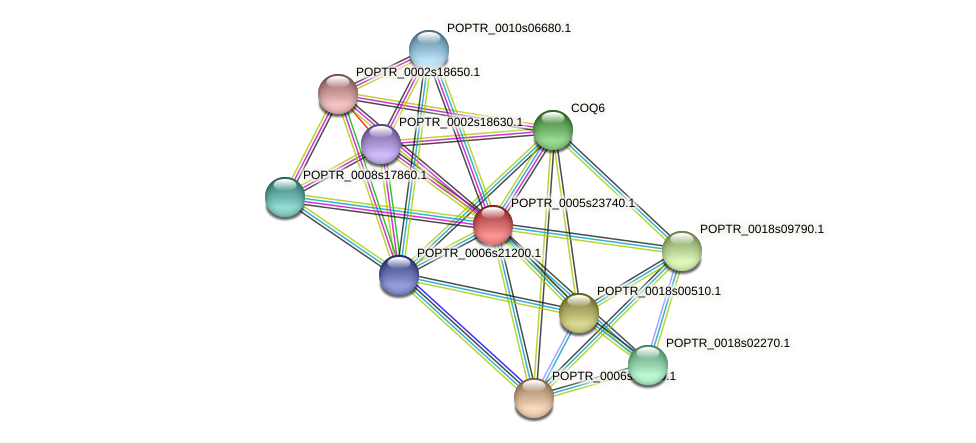 POPTR_0005s23740.1 protein (Populus trichocarpa) - STRING interaction network