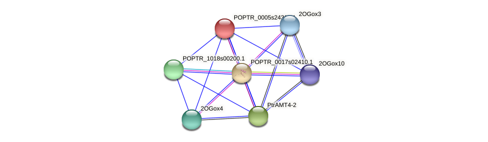 POPTR_0005s24360.1 protein (Populus trichocarpa) - STRING interaction network